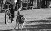 Husky Heroes '18, Morton Arboretum. 2 (EOS) (Mega-Magpie) Tags: canon eos 60d outdoors the morton arboretum husky heroes dogs race run bw black white mono monochrome dog