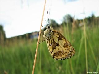 Butterfly 1561