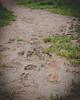 Symonds Yat (Marcus Revill) Tags: symonds yat wales england hiking hike forset spring autumn nikon d7000 walks walk woods