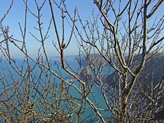 Coast near Boscastle seen through twigs (Philip_Goddard) Tags: twigs boscastle firebeaconhill cornwall coast northcoast coastpath southwestcoastpath southwestway landscapes scenery southwestengland england unitedkingdom britain british britishisles greatbritain uk europe