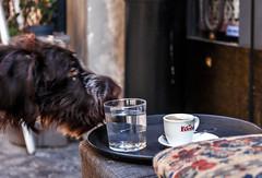 ... And then my biscuit was gone (thewhitewolf72) Tags: hund deutschesdrahthaar keks café trastevere transtiberim espresso rom