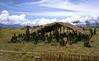 HG3-1-016b2 (Stichting Papua Erfgoed) Tags: henkgeut baliem varkensfeest papua irianjaya nieuwguinea stichtingpapuaerfgoed irianbarat