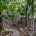 Vallée de Mai Nature Reserve, Praslin