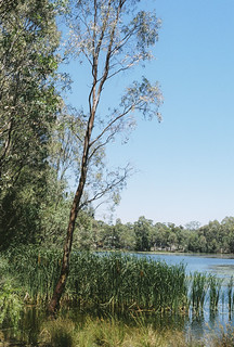 Kennington Reserve