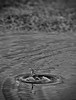 Water. Drop. Abstract (Peter Apas) Tags: fineartphotography fineart bw blackandwhitephotography abstractphotography pentaxk5
