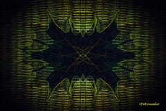 Dark Leaf (Stephenie DeKouadio) Tags: canon art artistic abstract abstractart macroabstract hypnotique leaf leaves darkandlight light dark
