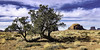 02469376311-97-Juniper in Monunment Valley-7 (Jim There's things half in shadow and in light) Tags: 2018 arazona canon5dmarkiv february monumentvalley navajo utah desert earth nature park sky statepark tree junipertree landscape southwest