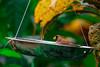 Finch feeding (Olivera White Photography) Tags: butterflyconservatory cambridge nature oliverawhite finch