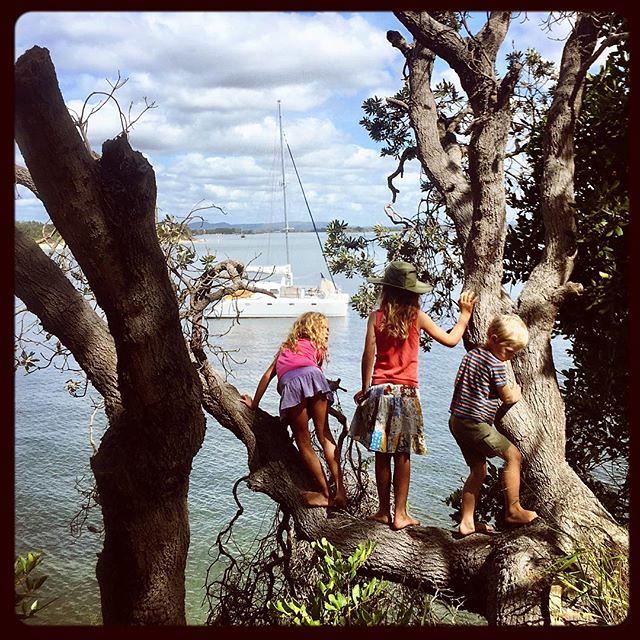 019/365 • roxy, daisy and eddie - monkeys on the edge of the sea...• . #yamba #whitingbeach #7yo #6yo #4yo #friends #love #outdoorfamilies #northernnsw #visitnsw #abcmyphoto #bellalunaboat #cruising #Summer2018 #eastcoastaustralia #clarenceriver