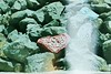 Slide film - painted rock (burntfeather) Tags: lomofilm slidexpro lomo slidefilm filmphotography xpro200 lomography om1 crossprocessed 200film lomographyfilm filmphotos olympusfilmcamera rockwall portmacquarie