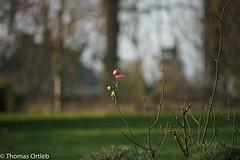A7200429 (Tommi_O) Tags: a7 a7ii garten ilce7m2 minoltaaf100200f45 sony garden