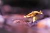 """Wildest Dream"" (regisfiacre) Tags: champignon pilz pilze mushroom fungi fungus forêt forest wald autumn automne herbst couleurs colors bokeh nature sauvage wild wildlife macro macrophoto macrophotography macrophotographie canon 5div mark iv 4 plein format full frame sigma 150mm apo ex dg os hsm moselle france sol ground erde feuilles feuille leaf leaves blatt"
