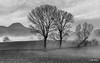 Campagna di San Severino Marche e sullo sfondo il monte San Vicino (Luigi Alesi) Tags: marche sanseverino italia italy macerata san severino monte vicino alberi trees bianoc e nero blach white bn bw nebbia foschia fog mist misty conuntryside fujifilm xm1 raw
