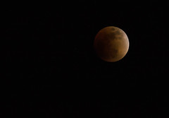Yet another super blood moon during the total eclipse (Aresio) Tags: moon blood eclipse shinjuku tokyo japan supermoon