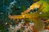 P9150811-1 (貓尾巴一步一腳印) Tags: 印尼 峇里島 bali 潛水 diving olympus tg4 mola