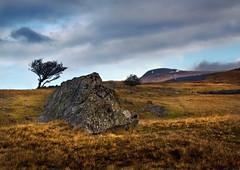 Lone tree and limestone (awardphotography73) Tags: colours cymru wales light winter lonetree tree brecon ystradfellte