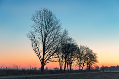 a Cold Morning (Pieter ( PPoot )) Tags: anserveld zonsopkomst vorst