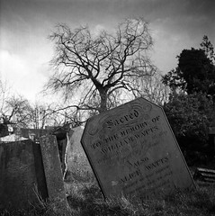 Mill Road Cemetery (RoryO'Bryen) Tags: millroadcemetery cambridge roryobryen copyrightroryobryen rollo rolleiflex rolleinar3 ilford ilfordxp2super mediumformat standdeveloped