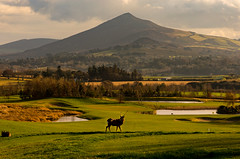 A silka in Wickla (ClassicAngles) Tags: 2018 classicangles stag nikon water mountains city dunloaghire lake sky flickr clouds pond powerscourt gcc antler silka fawn tamron24to70 sugarloaf dunloaghairegolfclub wicklow nikond3400 deer flickrtravelaward golf greystonescameraclub dublin countydublin ireland ie