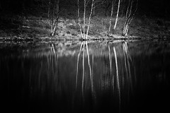 Black & White Reflections (Missy Jussy) Tags: blackwhite blackandwhite bw mono monochrome trees water reservoir reflections rochdale piethornevalley woodland forest canon canon5dmarkll canon70200mm 70200mm ef70200mmf4lusm ef70200mm