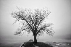Tree and Bench (mswan777) Tags: quiet lonely landscape white black monochrome ansel 1020mm sigma d5100 nikon stevensville michigan park bench tree shore lake winter fog mist scenic nature outdoor