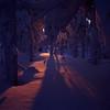 In das Licht II (zanettifoto) Tags: wiese schnee fujichromevelvia50 baum eis luosto sonnenuntergang sodankylä finnland winter himmel wald gegenlicht tetenalcolortece6 fin