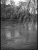hanging branches, reflections, French Broad River, Carrier Park, Asheville, NC, Mamiya 645 Pro, mamiya sekor 80mm f-2.8, Rollei Retro 400S, Moersch Eco Film Developer, mid February 2018 (steve aimone) Tags: branches hanging river frenchbroadriver reflections carrierpark westasheville asheville northcarolina mamiya645pro mamiyasekor80mmf28 mamiyaprime primelens 120 film 120film mediumformat rolleiretro400s moerschecofilmdeveloper blackandwhite monochrome monochromatic