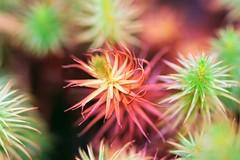 Moss (f.tyrrell717) Tags: florance whits bogs moss pine barrens