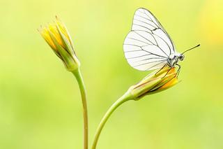 Butterfly Boogie...