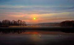 Sky. (augustynbatko) Tags: sky lake nature water landscape birds reflections clouds sunset swans