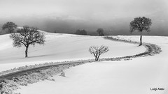 Neve sulle colline di San Severino Marche (Luigi Alesi) Tags: sanseverino italia italy marche macerata san severino gaglianvecchio paesaggio invernale landscape svenery winter neve snow inverno strada road way alberi trees bianco e nero black white bn bw natura nature nikon d750 raw