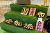 Japan 2017 Autumn_517 (wallacefsk) Tags: autumn chionji japan kyoto miyazu monju temple 京都 宮津 文珠 日本 智恩寺 秋天 關西 miyazushi kyōtofu jp