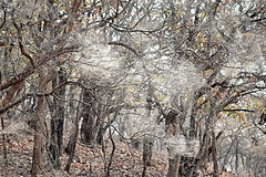 A Forest of Cobwebs