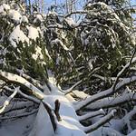 Harz-Oderbrueck_e-m10_1012074105 thumbnail