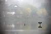 Cormorant 鸕鶿 (MelindaChan ^..^) Tags: westlake 西湖 hangzhou china 杭州 lake fog water chanmelmel mel melinda sudi melindachan tree 苏堤 reflection causeway cormorant 鸕鶿 bird