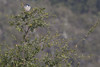 IMG_3394 (armadil) Tags: edgewoodpark bird birds jay jays scrubjay