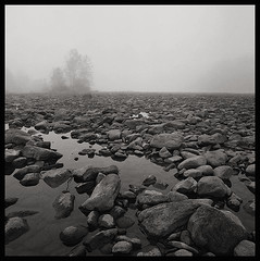 Rocks and Water, Fog and Trees (DRCPhoto) Tags: hasselblad500cm kodakt400cnfilm 120film squareformat cheatriver westvirginia