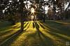 Luces y sombras en el parque (photoschete.blogspot.com) Tags: canon 1000d eos pisa 18mm parque park retiro madrid luz sombra light shadow trees grass sol sun