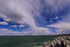 El observador (Mauro Esains) Tags: cormoranes playa mar océano agua tormenta aire libre piedras escollera nubes cielo rada tilly patagonia comodoro rivadavia perspectiva gran angular
