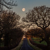 The Long Drive (davepickettphotographer) Tags: landscape moon lunar supermoon road uk kimbolton steneley drive cambridgeshire huntingdonshire greatstaughton early morning stonely