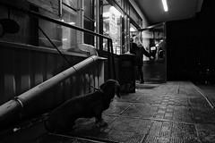 Ожидание / Waiting (spoilt.exile) Tags: украина киев лесное чб чернобелое магазин дождь зима ночь собака такса люди перспектива улица стрит ukraine kiev kyiv lisova bw blackandwhite shop rain winter night dog dachshund people perspective street streetphotography
