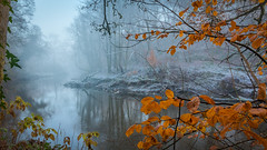 Cold Days - Warm Hearts (Adam West Photography) Tags: adamwest amber beautiful beauty cold flora fog freezing glasgow gold golden kelvin landscape midwinter mist nature river scotland travel trees uk winter