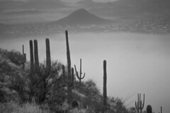 Tum026_small (patcaribou) Tags: tucson tumamochill sonorandesert fog cactii saguarocactus