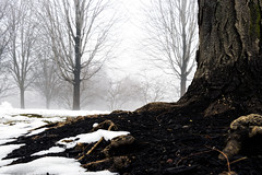 Snow covered trunk (RaulCano82) Tags: snow trees trunk nature park millenniumpark canon 80d raulcano landscape photography earth wood bark tree roots mulch snowy chicago illinois il ice cold winter 2018