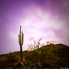 Surreal Days (Ken Mickel) Tags: arizona cacti cactus clouds cloudscape cloudy desert estrellla goodyeararizona kenmickelphotography landscape landscapedesert longexposure longexposurephotography outdoors plants saguaro sky nature photography goodyear unitedstates us