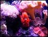 Grumpy fish (karinanovak) Tags: grumpy fish underwater reef coral pink purple