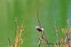 PA231110t_e (mrkevinw08) Tags: portugal algarve parquenaturaldariaformosa parque natural riaformosa