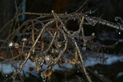 2018_0123More-Ice0013 (maineman152 (Lou)) Tags: winter winterweather badweather icestorm icecovered ice nature naturephoto naturephotography january maine