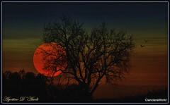 Il mio albero di mandorlo - Gennaio-2018 (agostinodascoli) Tags: mandorlo tramonto nikon nikkor cianciana sicilia agostinodascoli nature texture paesaggio sunset landscape cielo piante photoshop art digitalart