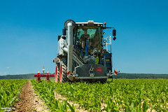 Strip Till slurry injection into the crop of corn | CLAAS // SGT // KVERNELAND (martin_king.photo) Tags: czechpremiere striptill slurryinjection cropofcorn claas sgtgülletechnik kverneland sgtgülleaufbau claasxerion4000 claasxerion4000saddletrac sgt gulletechnik kvernelandkultistrip injector tractor huge machine all everything servis tschechische republik powerfull martin king photo agriculture machines strong agricultural greatday great czechrepublic sky allclaaseverything claasfans alliancetyres work workplace big machinery yellow tschechischerepublik martinkingphoto welovefarming agriculturalmachinery workday working modernagriculture landwirtschaft green red colorful colors blue bluesky mais maize corn photogoraphy photographer